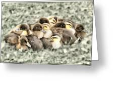 Baby Ducks Greeting Card