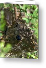 Baby Eastern Cottontail Rabbit Dmam011 Greeting Card