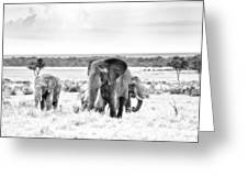 Baby Elephants -black And White Greeting Card