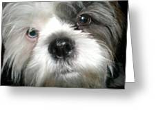 Baby Face Dog Greeting Card