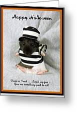 Baby Guinea Pig Trick Or Treat Greeting Card