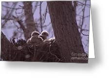 Baby Hawks Greeting Card