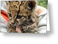 Baby Jaguar Greeting Card