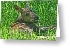 Baby Moose Greeting Card