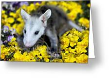 Baby Opossum In Flowers Greeting Card