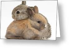 Baby Rabbits Greeting Card by Mark Taylor