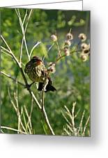 Baby Red Wing Black Bird Calling For Mother Greeting Card
