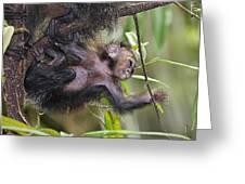 Baby Sak-monkey Greeting Card