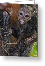 Baby Saki Greeting Card