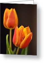 Baby Tulips Close Up Macro Greeting Card