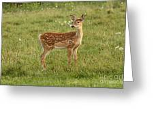 Baby Whitetail Fawn In A Spring Meadow Greeting Card