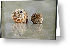 Babylon Shells Greeting Card