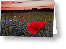 Bachelor Buttons And Poppies Greeting Card