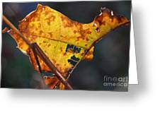 Back-lit Golden Leaf Greeting Card