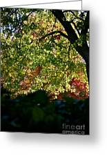 Backlit Autumn Greeting Card