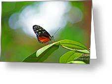 Backlit Butterfly Greeting Card