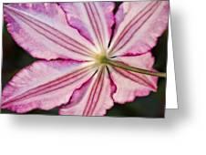 Backlit Clematis Greeting Card