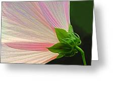 Backlit Mallow Greeting Card