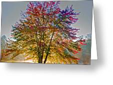 Backlit Maple In Autumn's Light Greeting Card