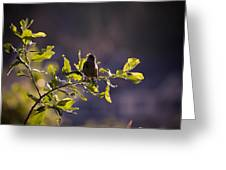 Backlit Song Greeting Card