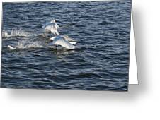 Backlit Swans Greeting Card