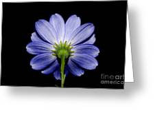 Backside Of A Blue Flower Greeting Card