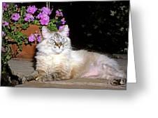 Backyard Beauty Greeting Card