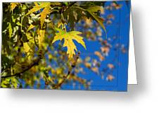 Backyard Leaves Greeting Card
