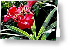 Backyard Red Beauty Greeting Card