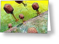 Bacteriophage T4 Virus Group 2 Greeting Card by Russell Kightley