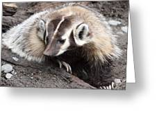 Badger - 0007 Greeting Card