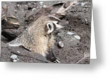 Badger - 0010 Greeting Card