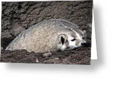 Badger - 0015 Greeting Card