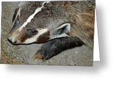 Badger On The Loose Greeting Card