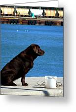 Bait Protector Greeting Card