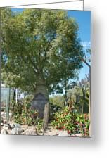 Balboa Tree Greeting Card