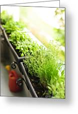 Balcony Herb Garden Greeting Card