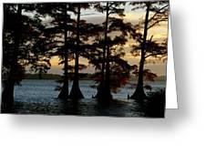 Bald Cypress Trees Growing Greeting Card