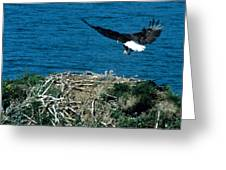 Bald Eagle And Chicks Greeting Card