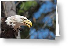 Bald Eagle At Mclane Center Greeting Card