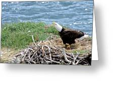 Bald Eagle Calling Greeting Card