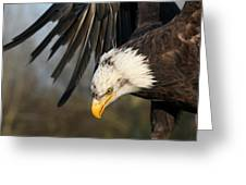 Bald Eagle Diving Greeting Card