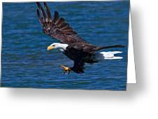 Bald Eagle On The Hunt Greeting Card