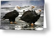 Bald Eagle Trio Greeting Card