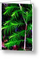 Baldcypress Greeting Card
