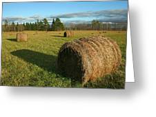 Bales Greeting Card
