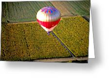 Ballooning Over Burgundy Greeting Card