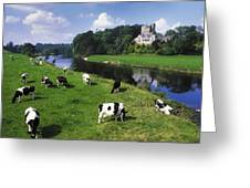 Ballyhooley, Co Cork, Ireland Friesian Greeting Card