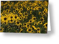 Balsamroot Field In Grand Teton Greeting Card