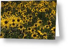 Balsamroot Field In Grand Teton Greeting Card